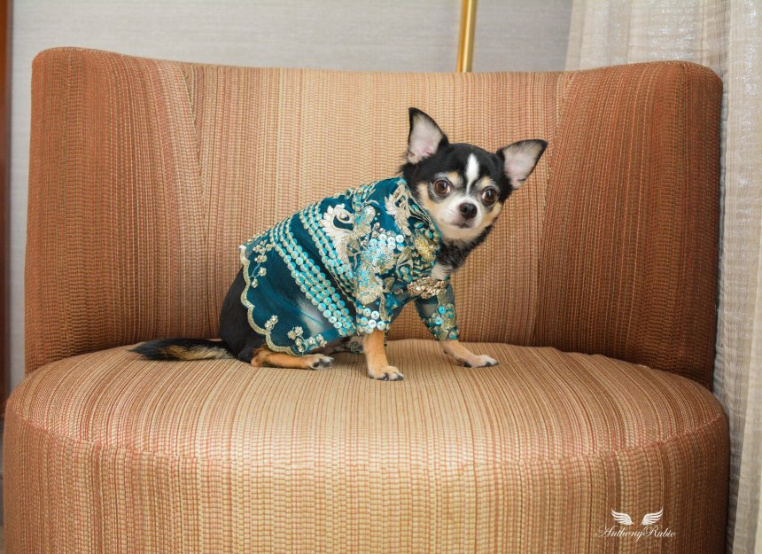 Resort wear for dogs by Anthony Rubio