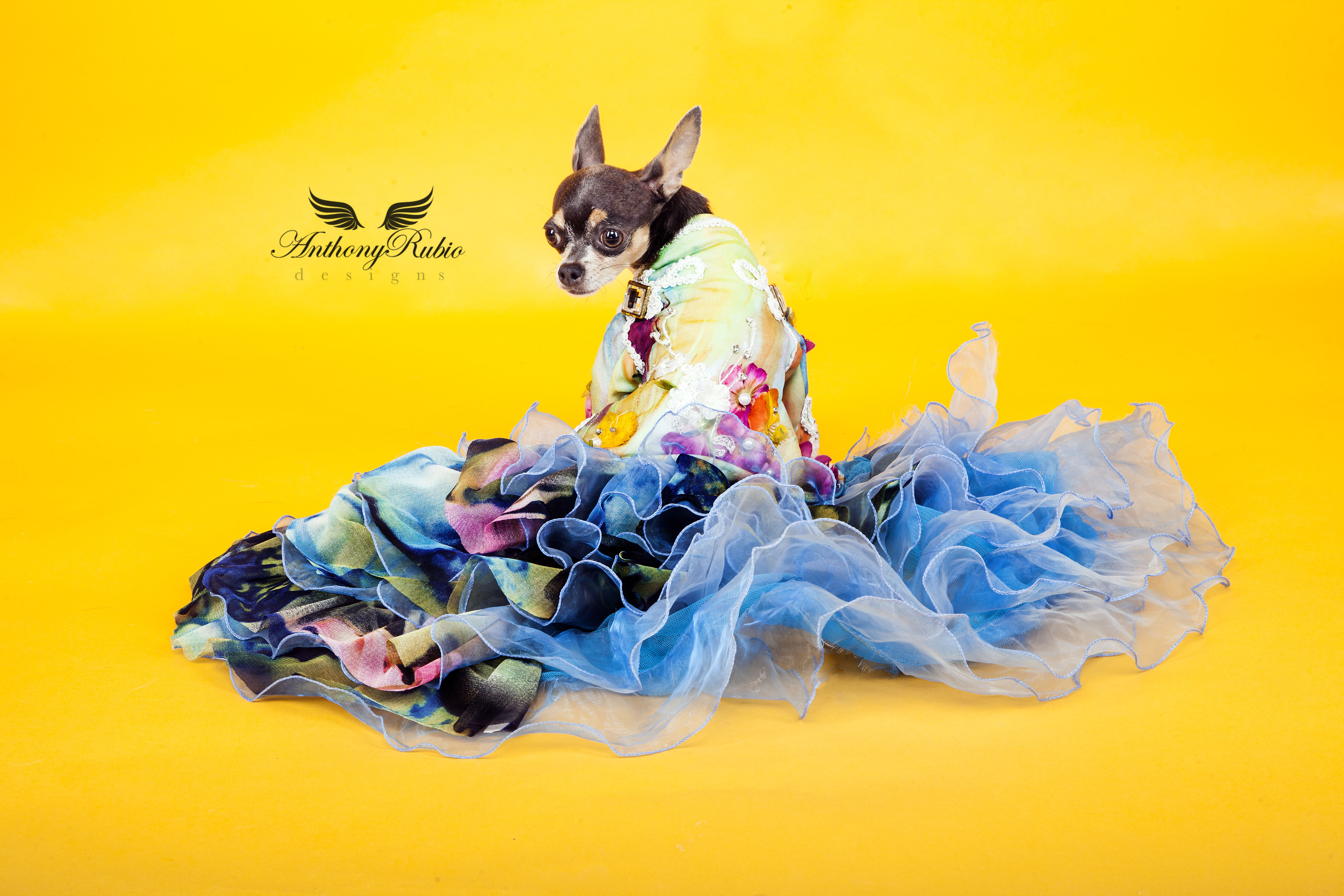 Dog Fashion by Anthony Rubio - Gowns For Dogs