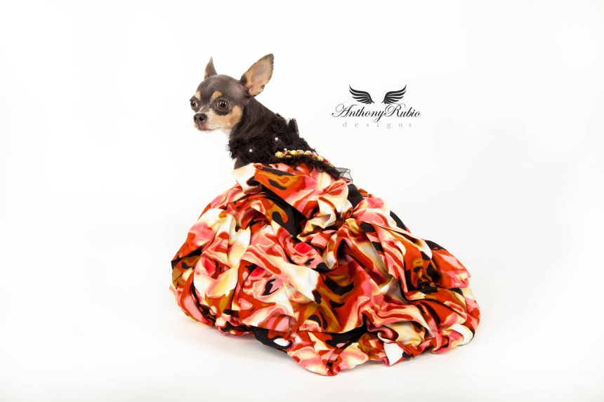 Gowns For Dogs by Anthony Rubio - Dog Fashion