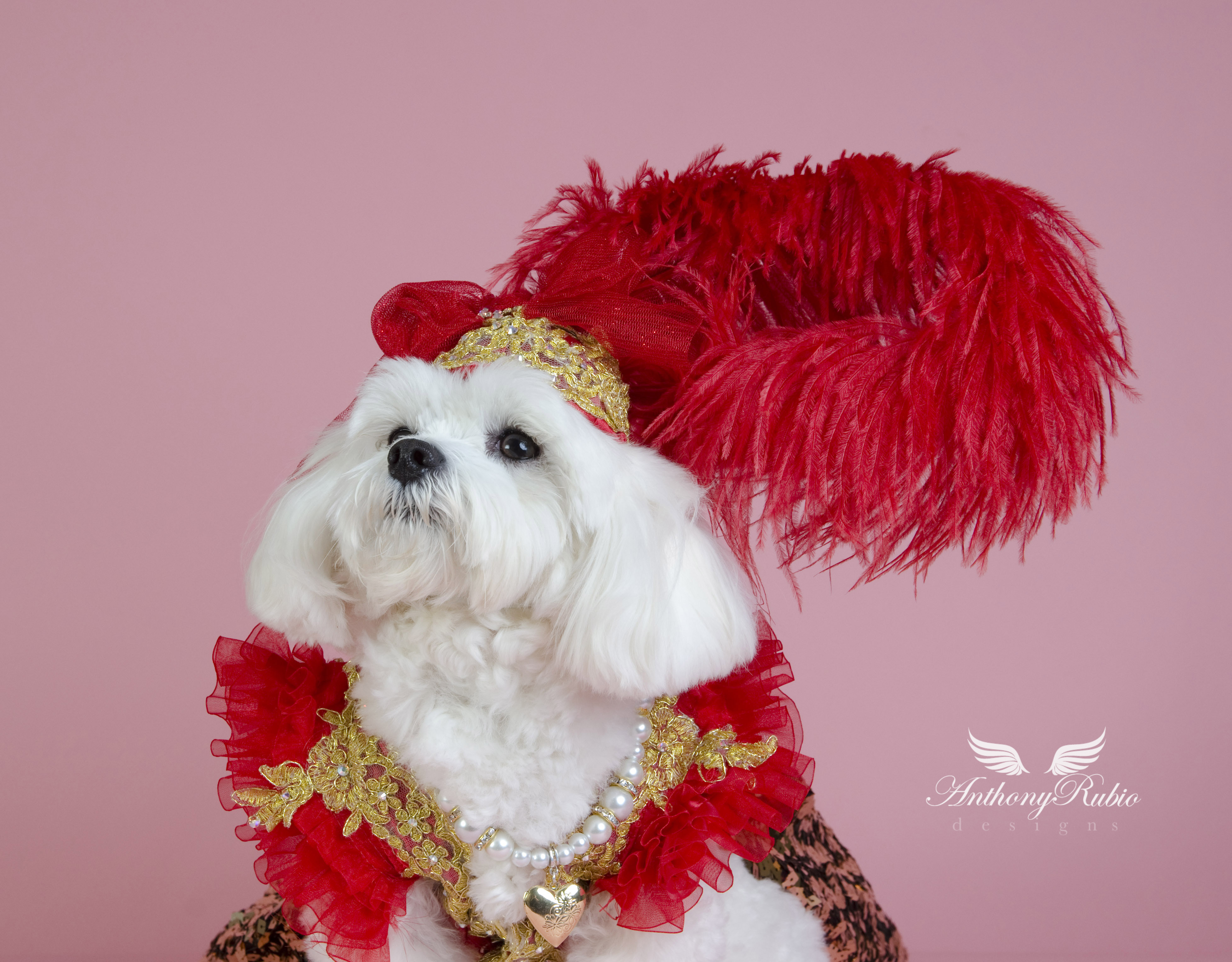 Millinery by Anthony Rubio. Dog Fashion