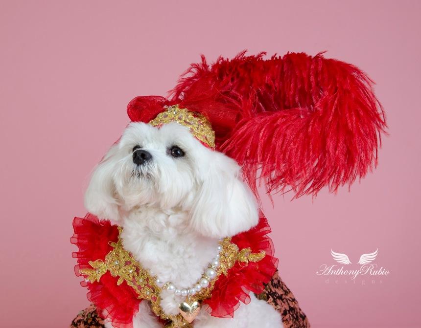 Millinery by Anthony Rubio. Dog Fashion