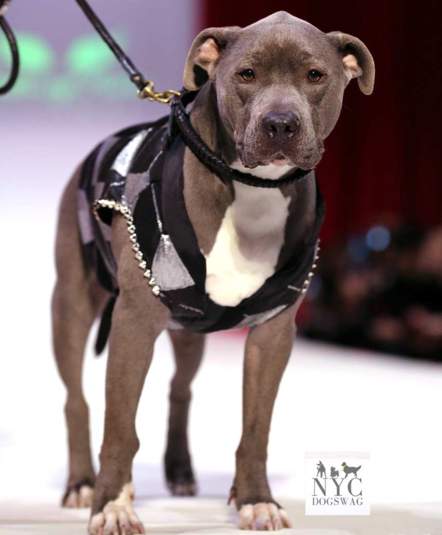 Anthony Rubio Fall/Winter 2016 - New York Fashion Week Women's Wear & Canine Couture Canine Model: Chase, SometimesCarl Photo by: Jason Howard