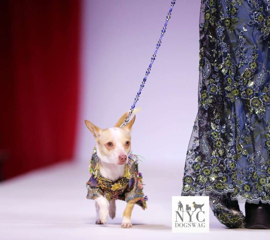 Anthony Rubio Fall/Winter 2016 - New York Fashion Week Women's Wear & Canine Couture Canine Model: Little Bean Photo by: Jason Howard