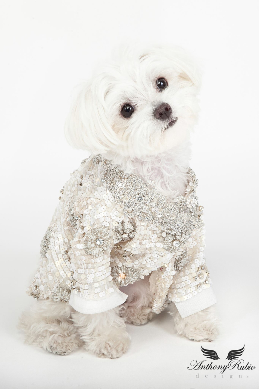 Gowns for Dogs by Anthony Rubio - Pet Fashion