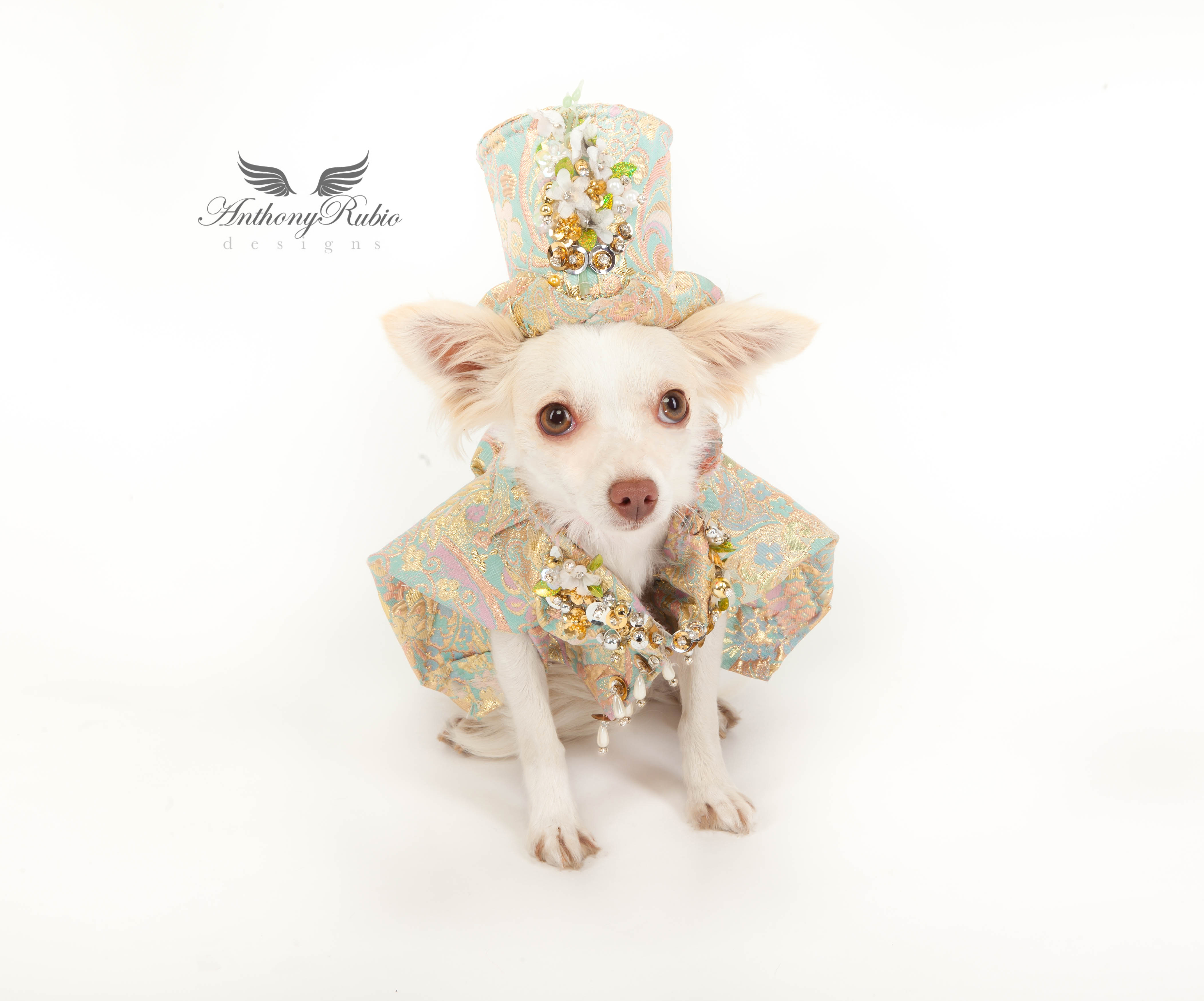 Dog Fashion by Anthony Rubio
