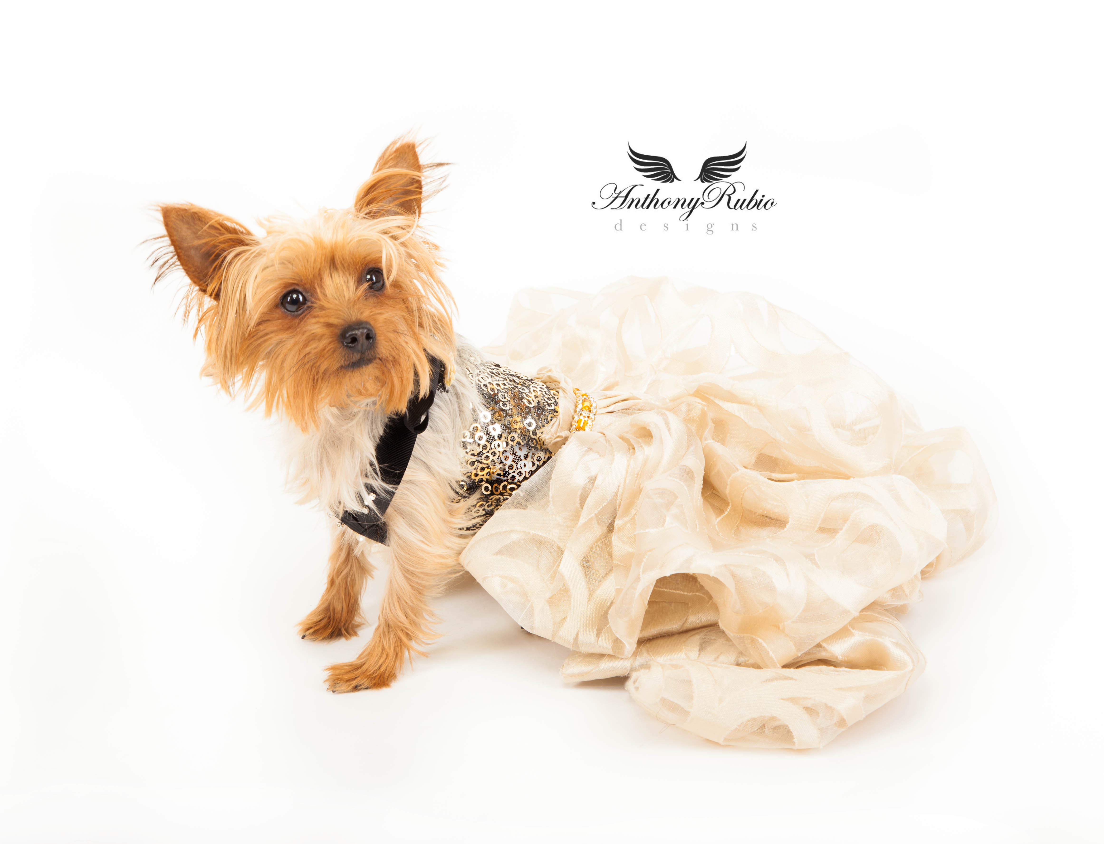 Evening Gown for Dogs by Anthony Rubio