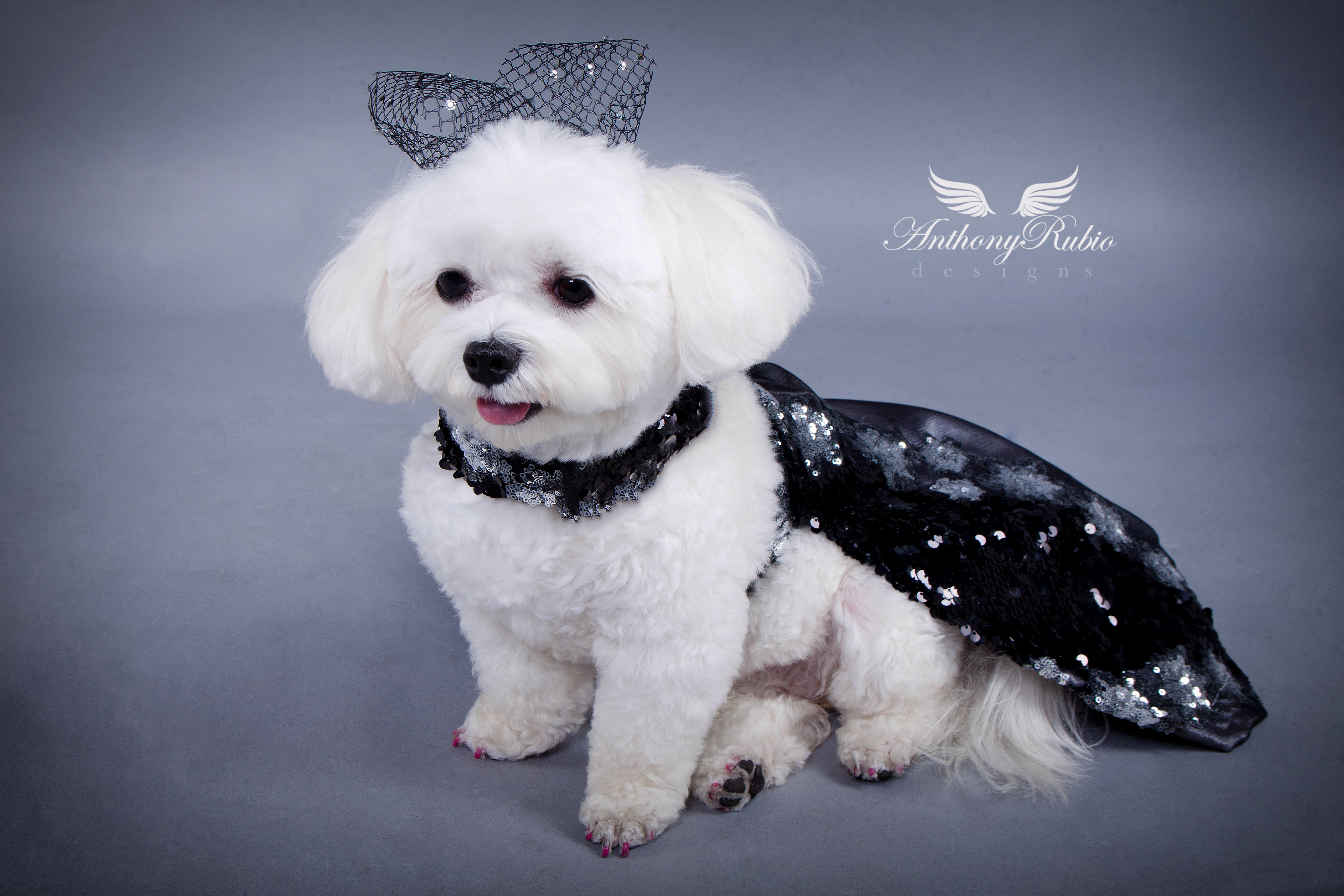 Anthony Rubio, Gowns For Dogs, Dog Fashion,