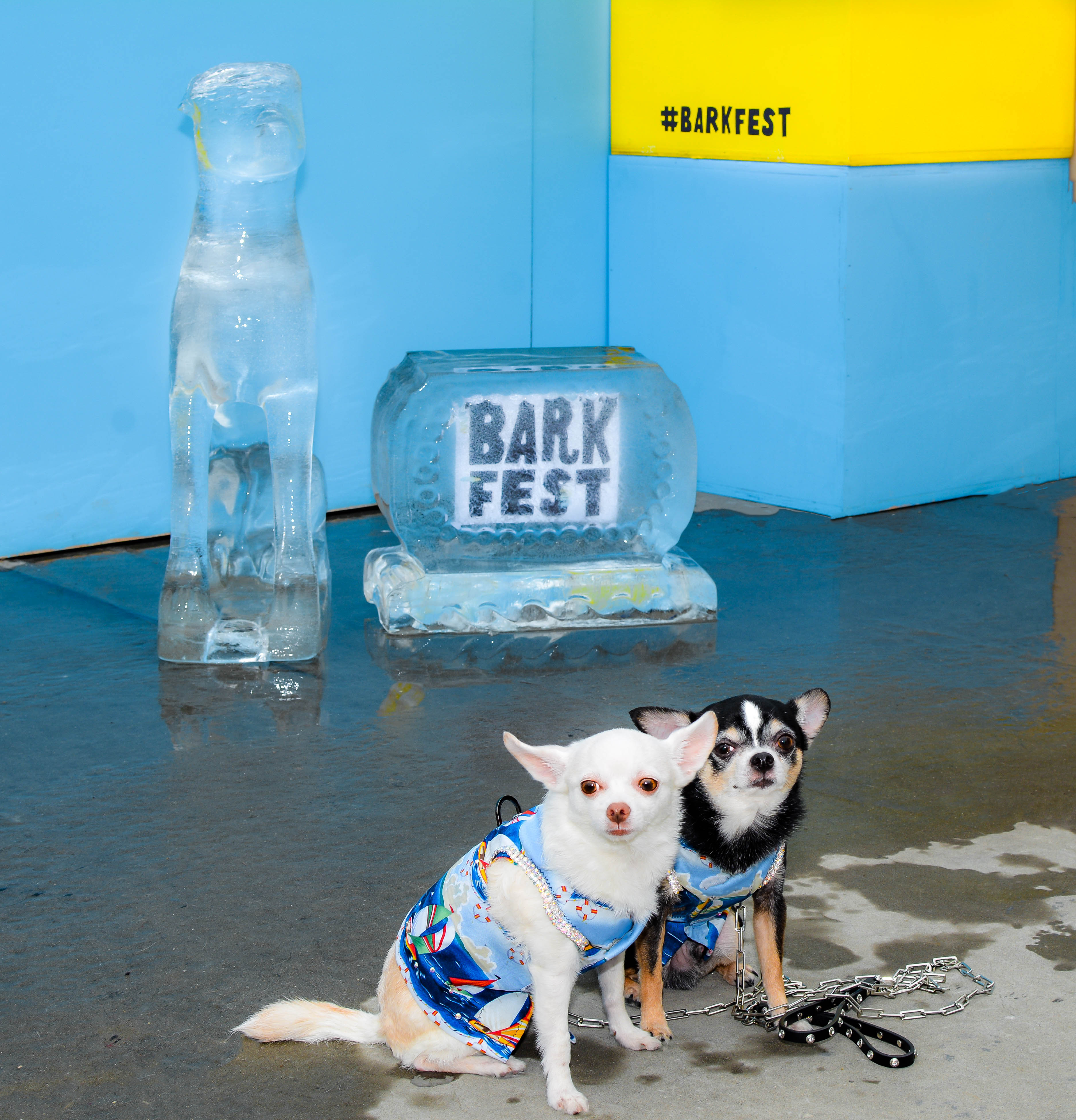 Anthony Rubio and Chihuahua duo Bogie and Kimba at the 2016 BarkFest