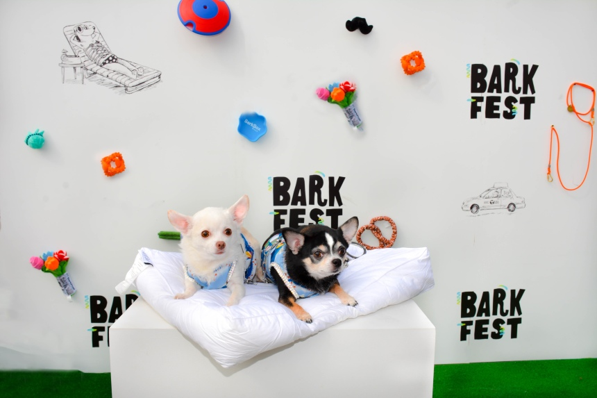 Anthony Rubio and Chihuahua duo Bogie and Kimba at the 2016 ‪BarkFest