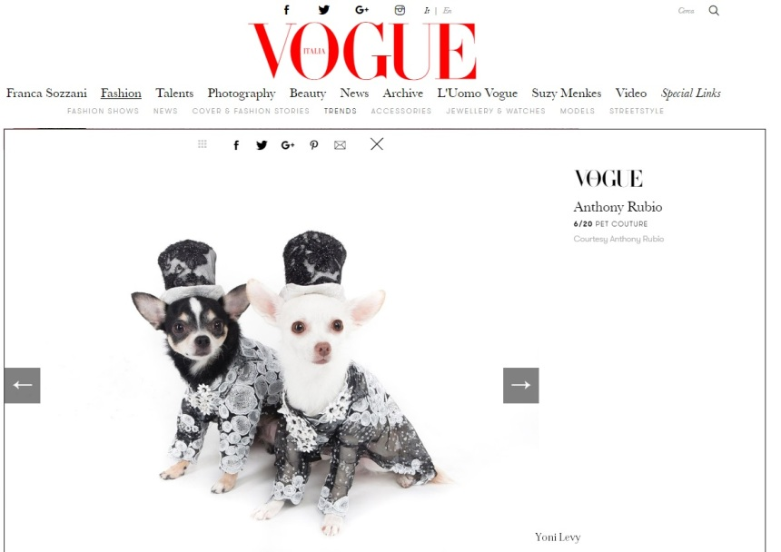 Anthony Rubio Designs featured article in Vogue Italia Photo by Yoni Levy Models: Bogie and Kimba, Chihuahuas