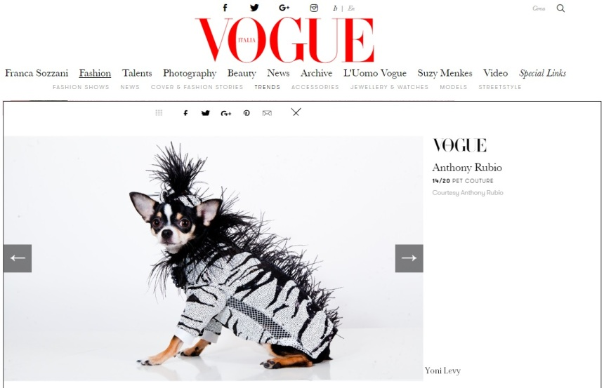Anthony Rubio Designs featured article in Vogue Italia Photo by Yoni Levy Model: Bogie, a Chihuahua