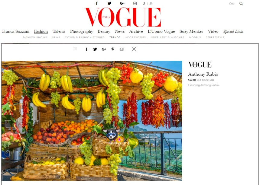 Anthony Rubio Designs featured article in Vogue Italia Photo by Rob Robb Model: Bogie, a Chihuahua