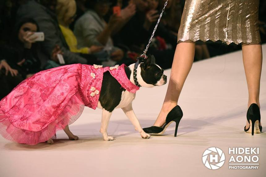 Anthony Rubio Fall/Winter 2016 - New York Fashion Week Women's Wear & Canine Couture Female Model: Josie Giordano Canine Model: Rita Photo by: Hideki Aono