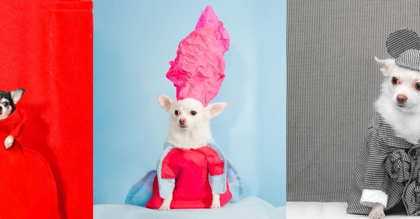 Anthony Rubio, 2017 Met Gala, Rei Kawakubo Inspiration, Dog Fashion, Comme Des Garcons, Bogie and Kimba,