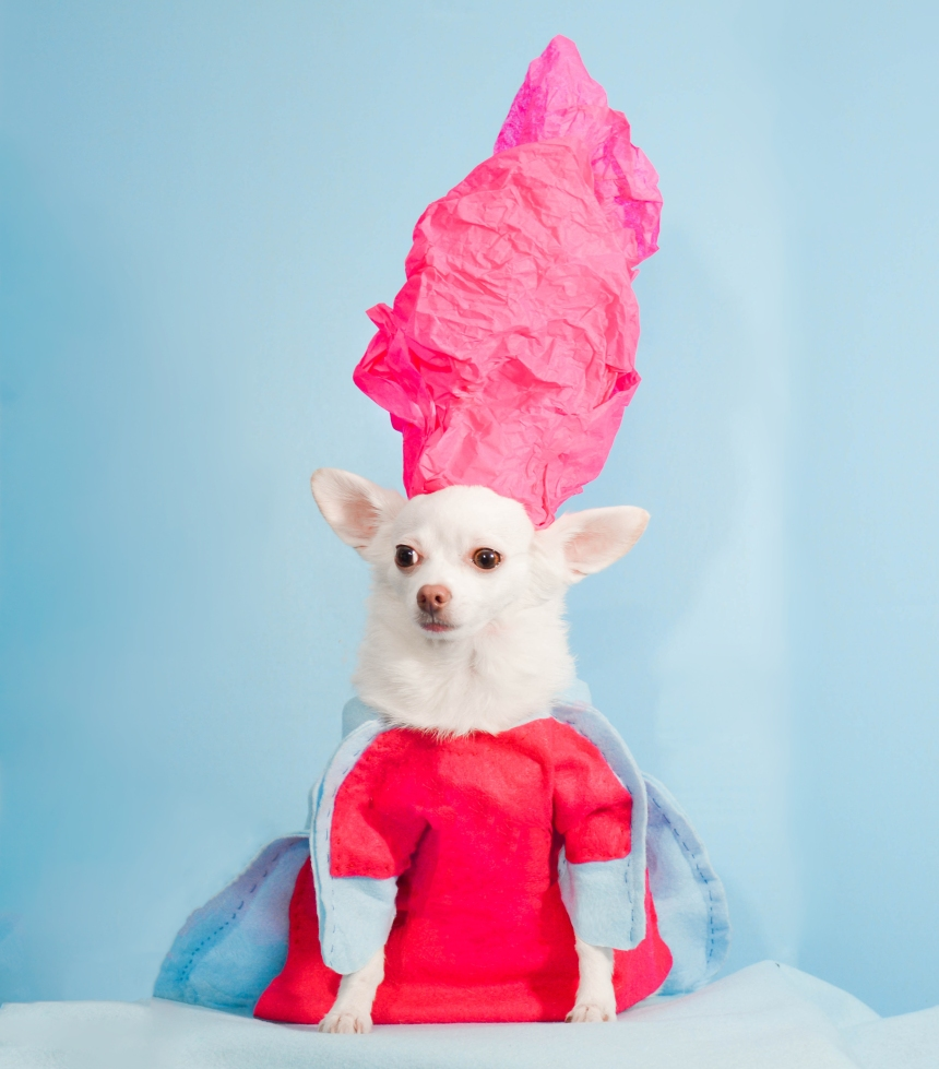 Pet Couturier Anthony Rubio recreated iconic creations by Rei Kawakubo for Comme des Garcons as a tribute for the 2017 Met Gala.