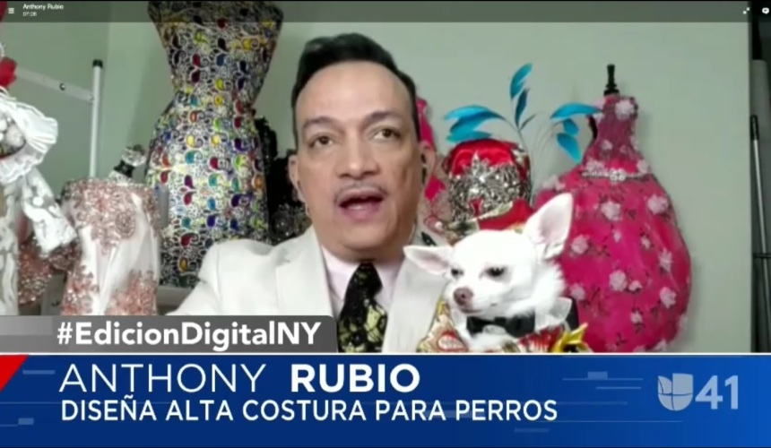 Anthony Rubio on Univision! Internationally acclaimed Pet Couturier Anthony Rubio's interview on Edicion Digital New York with Rafael Bello and Patricia Fuenmayor on Univision Nueva York. The interviewed is about Anthony Rubio's Canine Couture, Women's Wear, his inspirations, his story on how and why he broke the barriers to be the first pet fashion designer to have presented during any New York Fashion Week.