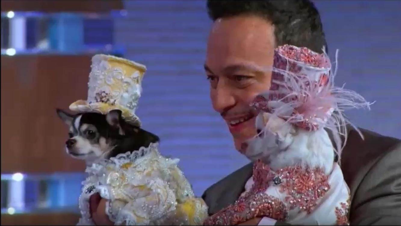 """Pet Fashion Designer Anthony Rubio on """"To Tell The Truth"""" with Anthony Anderson  on ABC Network"""