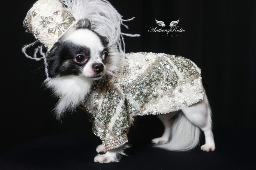 Dog Fashion by Anthony Rubio - Top Hats for Dogs