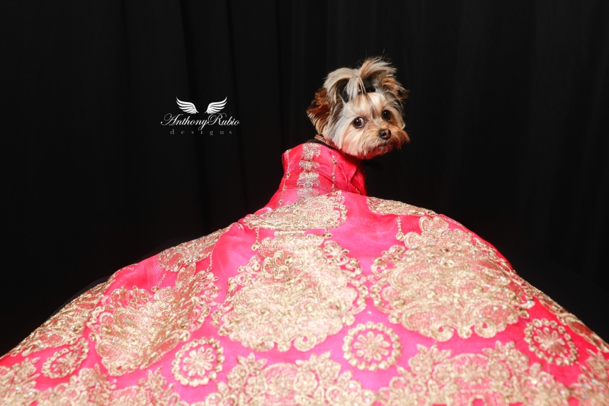Canine Couture by Anthony Rubio. Canine Model: @LivieTheMork - Gowns For Dogs