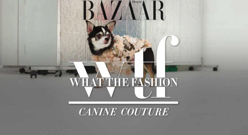 Anthony Rubio featured Harper's Bazaar show WTFashion with host William Graper
