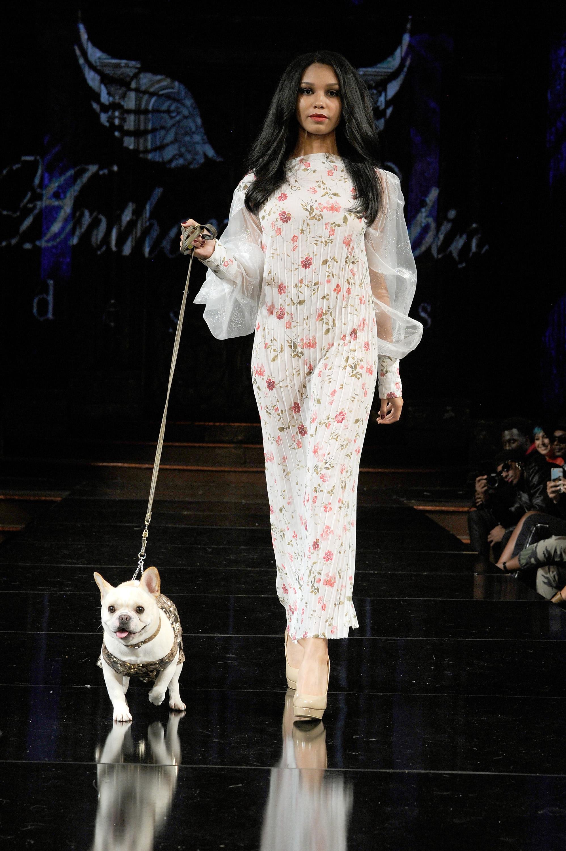Картинки по запросу new york fashion animal