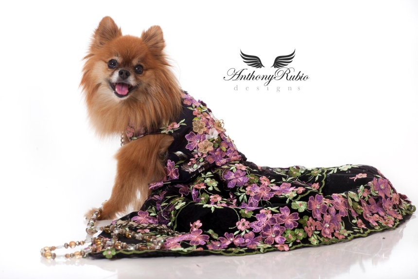 Canine Couture by Anthony Rubio