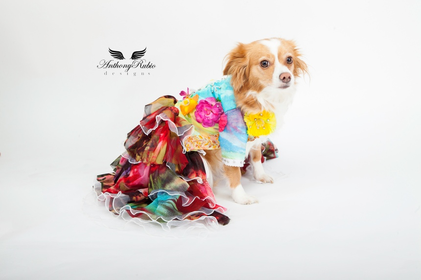 Dog Fashion by Anthony Rubio.