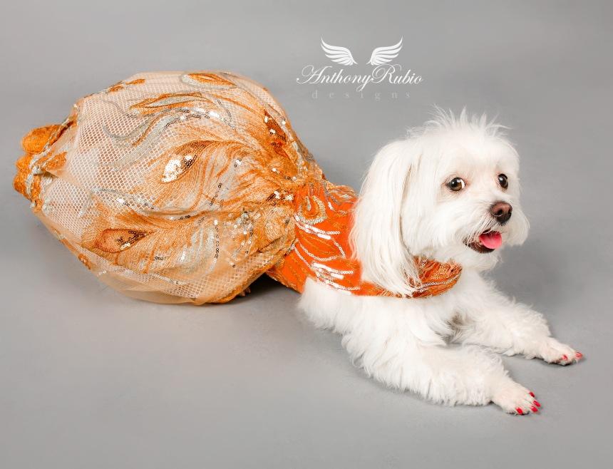 Dog Fashion by Anthony Rubio
