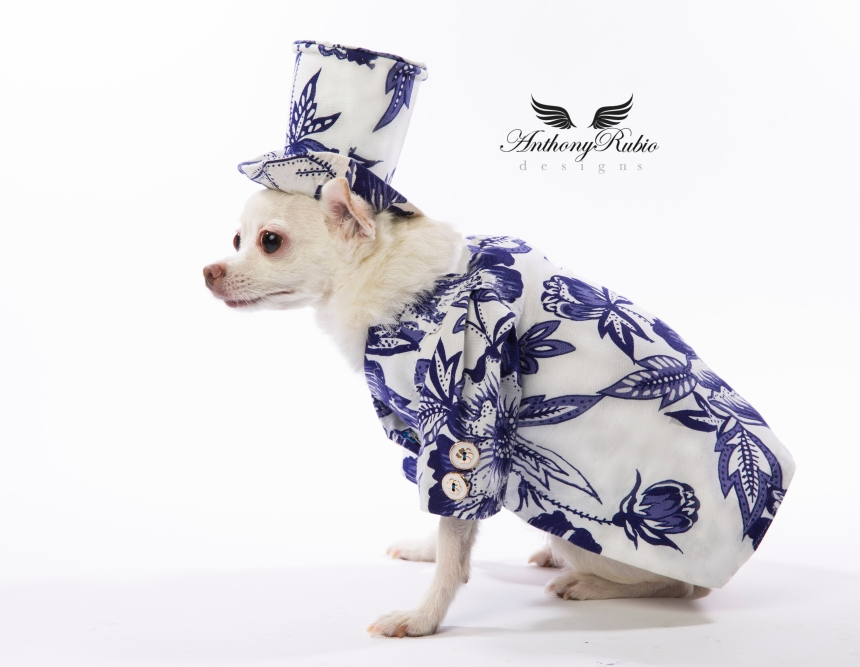 Canine Couture by Anthony Rubio - Resort Wear For Dogs