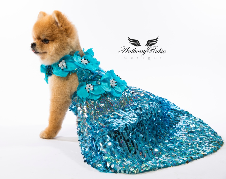 Gowns For Dogs - Canine Couture by Anthony Rubio