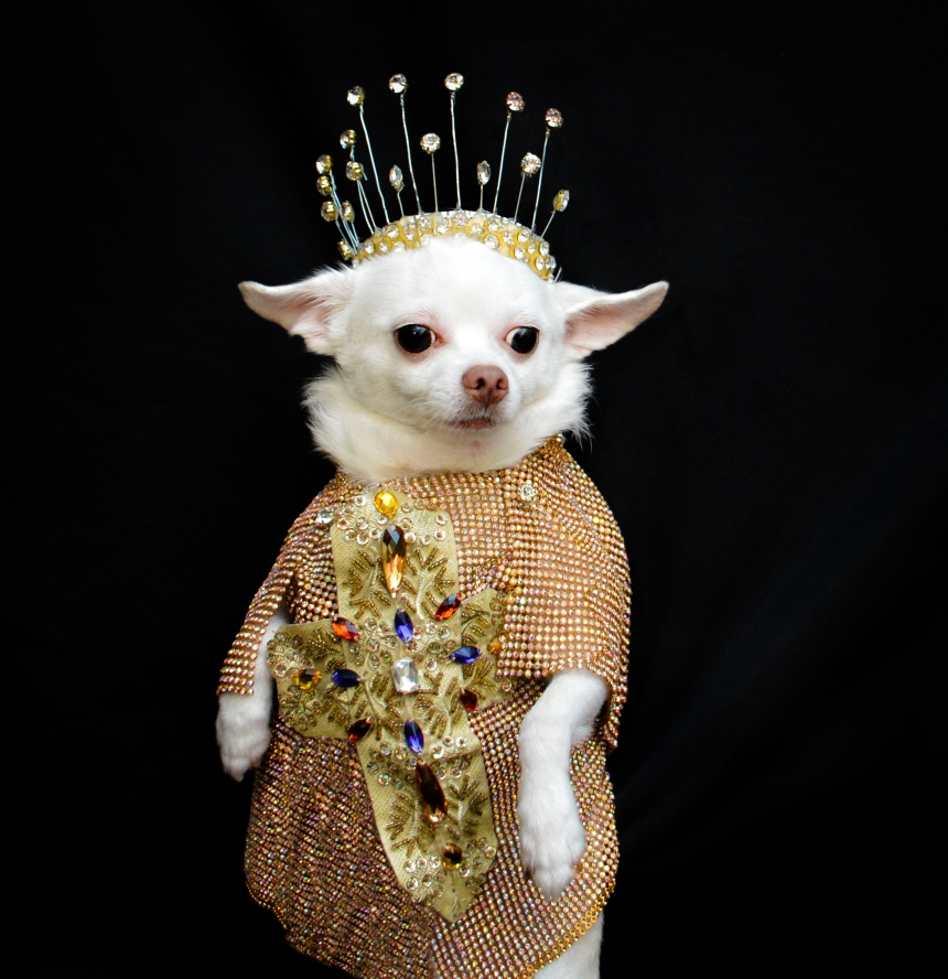 Chihuahua Kimba wearing Heavenly Bodies exhibit Inspired Outfit by Anthony Rubio