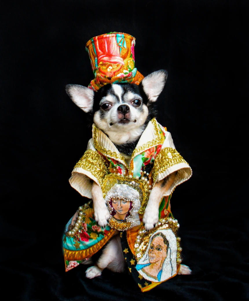 Chihuahua Bogie wearing Heavenly Bodies exhibit Inspired Outfit by Anthony Rubio