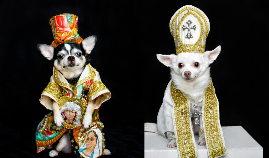 Chihuahuas wearing Heavenly Bodies exhibit Inspired Outfits by Anthony Rubio