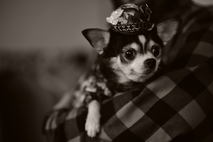 Canine Model Bogie taking a break during photo shoot