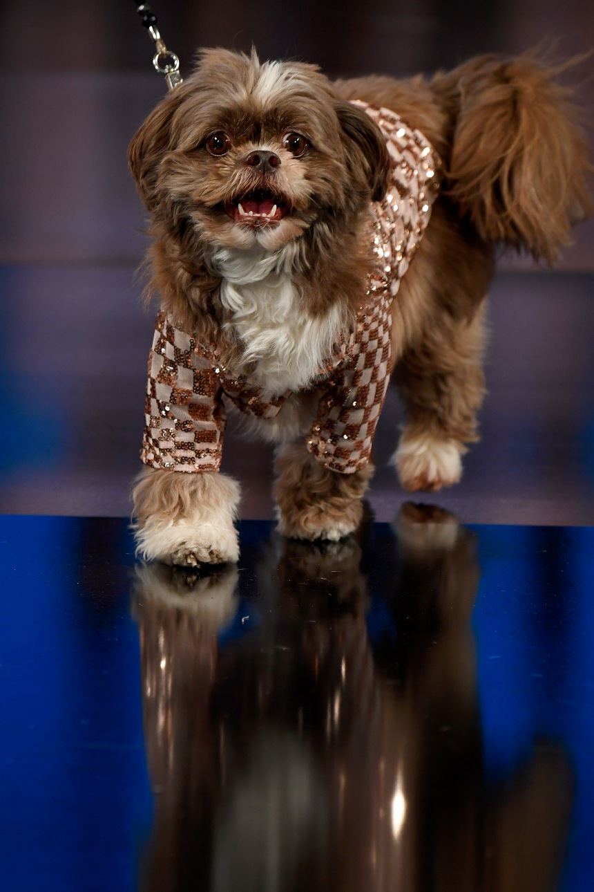 Anthony Rubio Women's Wear and Canine Couture New York Fashion Week Photo by Arun Nevader for Getty Images
