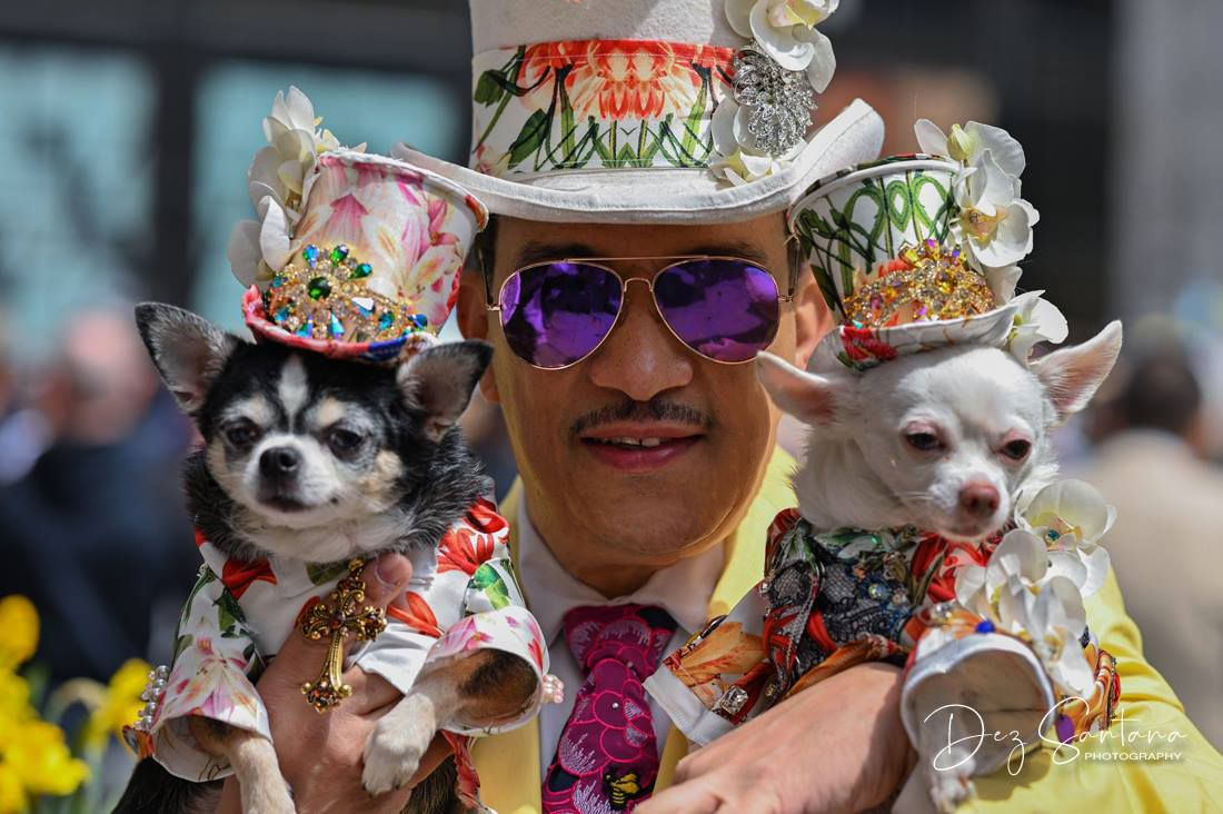 Anthony Rubio, Easter Parade, Dogs, Bonnets, Chihuahuas, New York, Dog Fashion, Canine Couture,