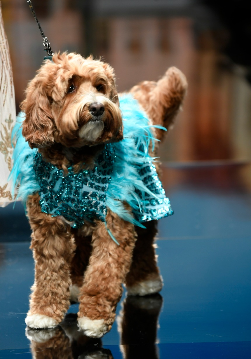 Anthony Rubio Women's Wear and Canine Couture Los Angeles Fashion Week Photo by Arun Nevader for Getty Images