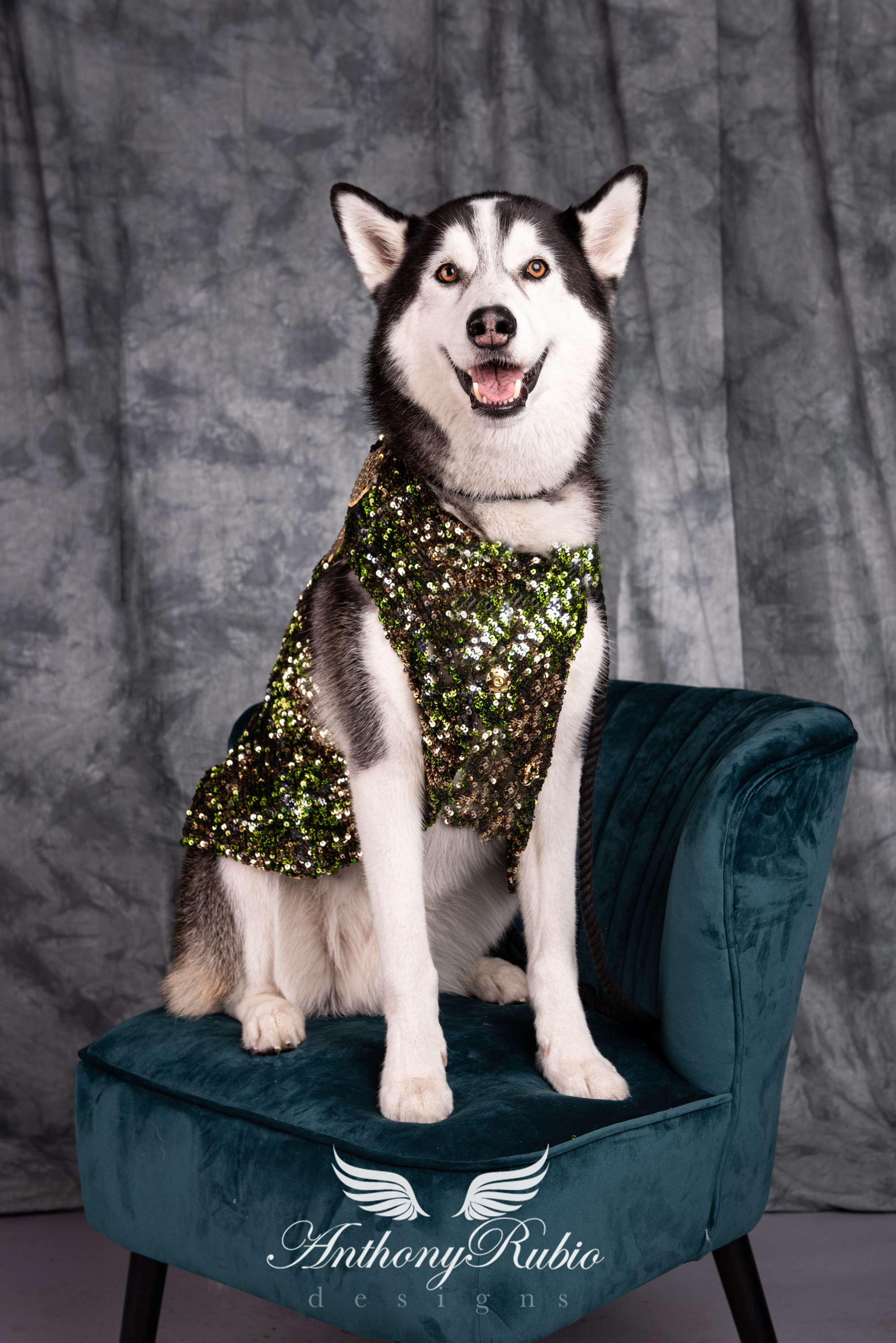 Anthony Rubio, Dog Fashion, Canine Couture, Pet Fashion,
