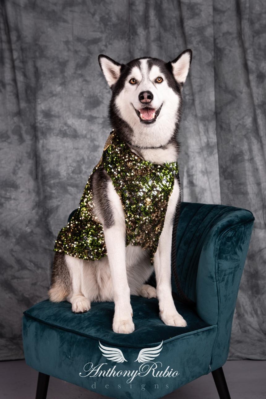 Anthony Rubio, Dog Fashion, Canine Couture, Pet Fashion,