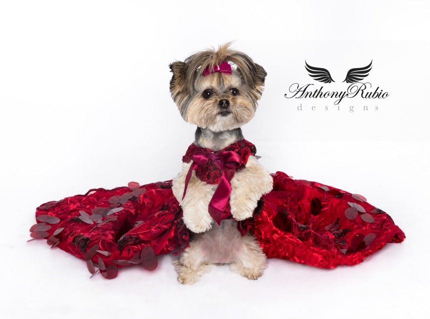 Gowns For Dogs – Pet Fashion by Anthony Rubio