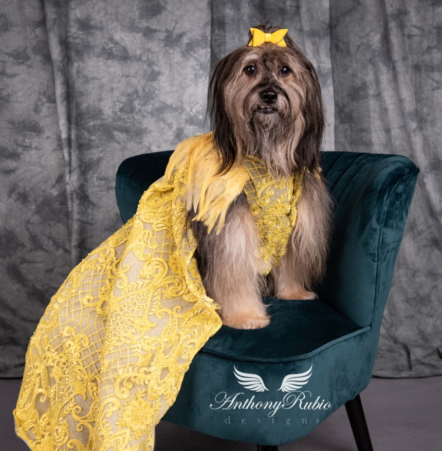 Gowns For Dogs - Pet Fashion by Anthony Rubio