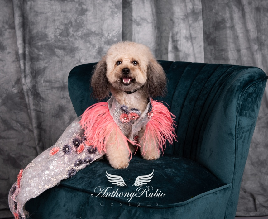 Gowns For Pets - Pet Fashion by Anthony Rubio